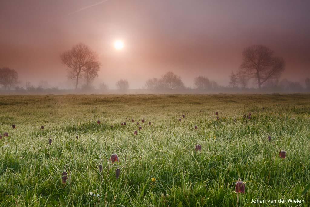 Over het warme licht van de lente en werken met filters - 1