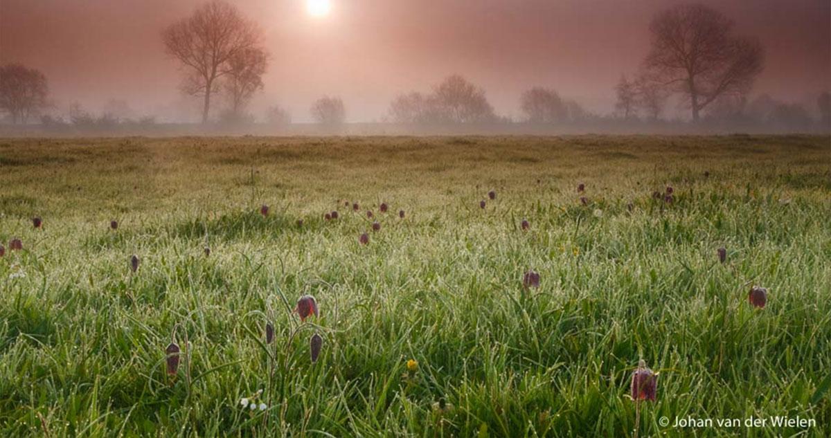 Over het warme licht van de lente en werken met filters