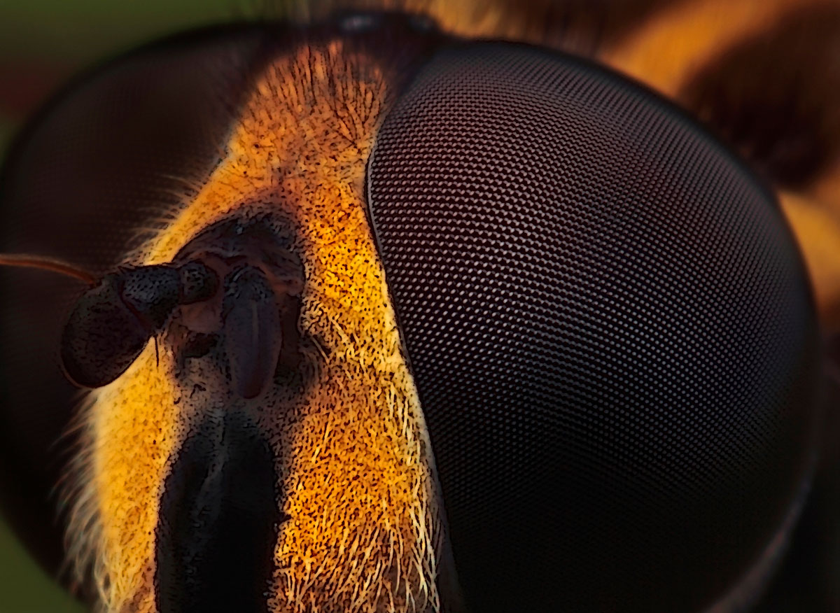 Microfotografie - 1