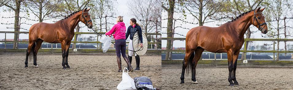 Tips voor het fotograferen van een paard - 1