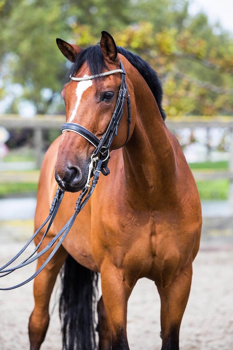 Tips voor het fotograferen van een paard - 4