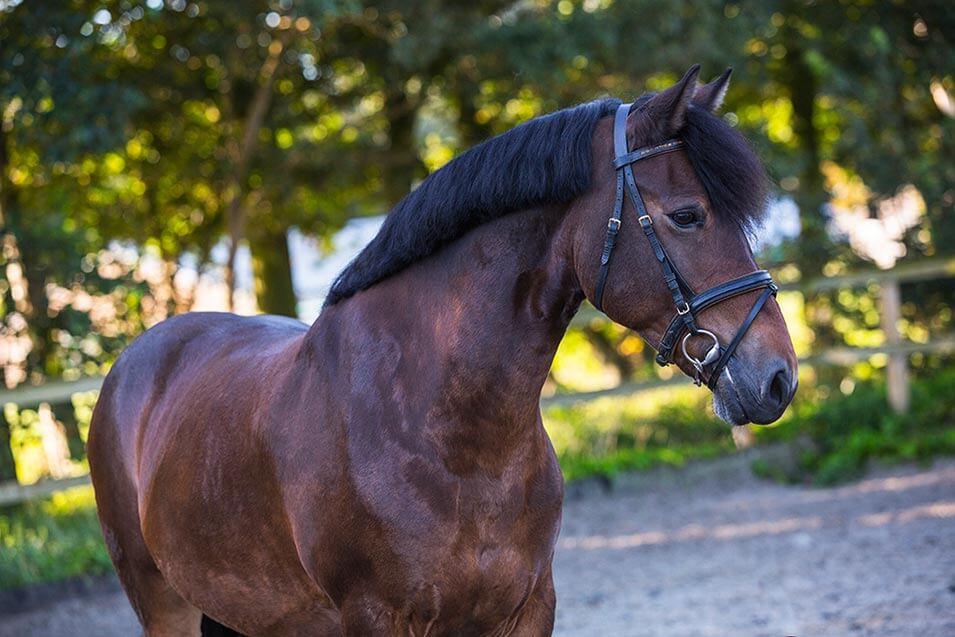 Tips voor het fotograferen van een paard - 5