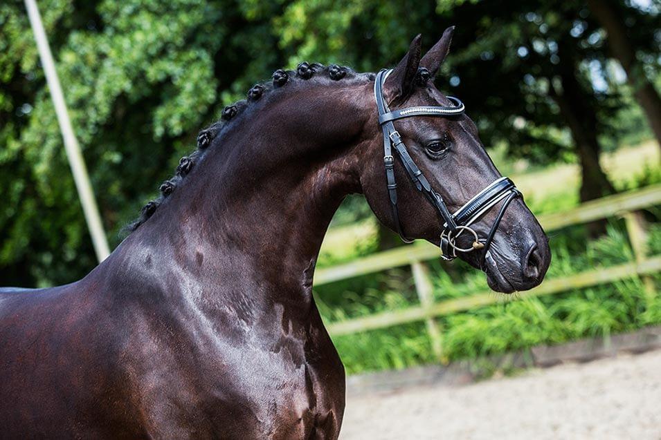Tips voor het fotograferen van een paard - 9
