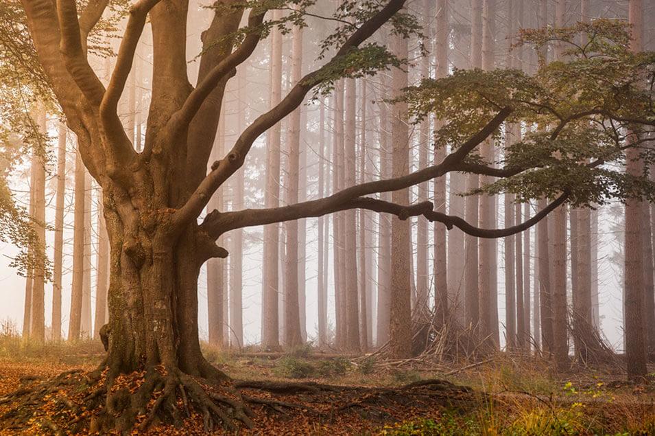 De koning van het bos
