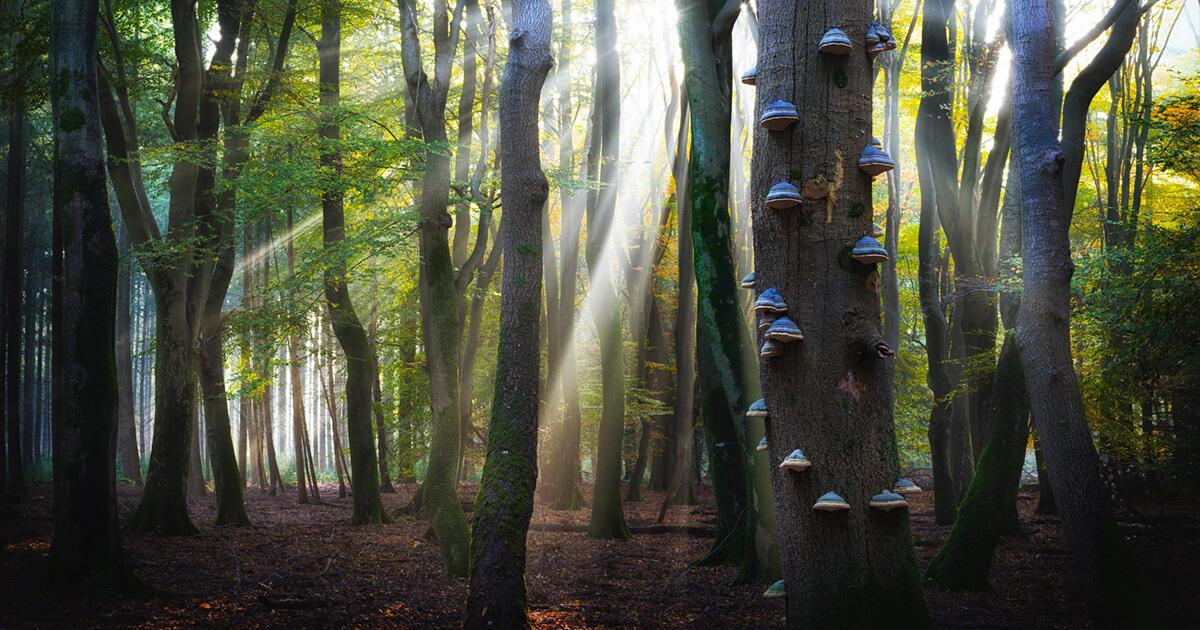 Tips om foto's te maken in het bos