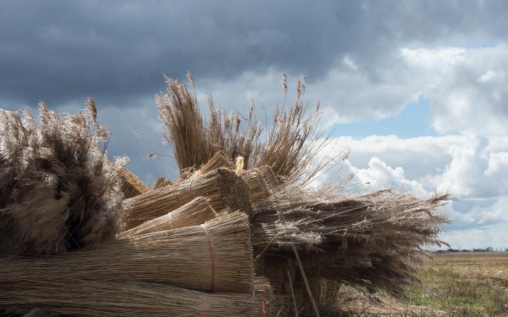Workshop rietsnijders en landschapsfotografie