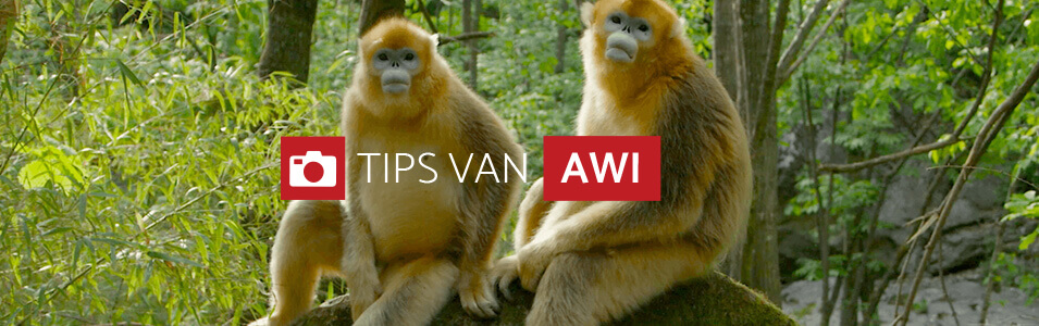 Tips voor natuurvideo's