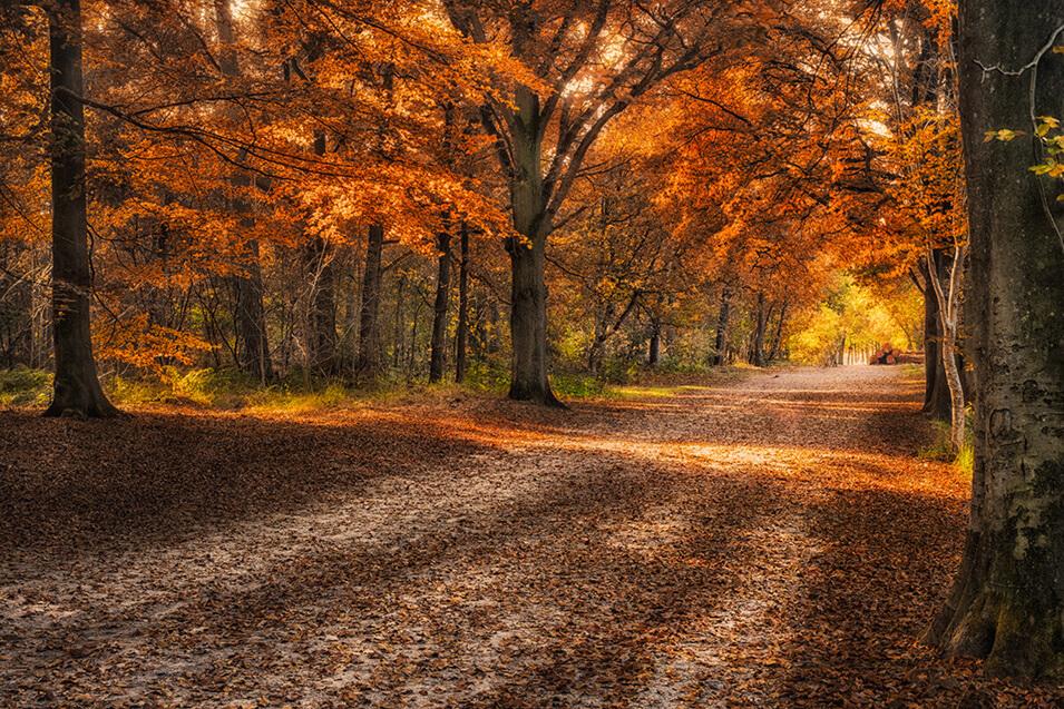 fa585d1ba26faf 10 tips voor landschapsfotografie in de herfst - 4