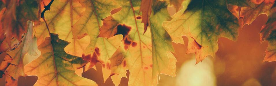 Wat fotografeer je in de herfst?