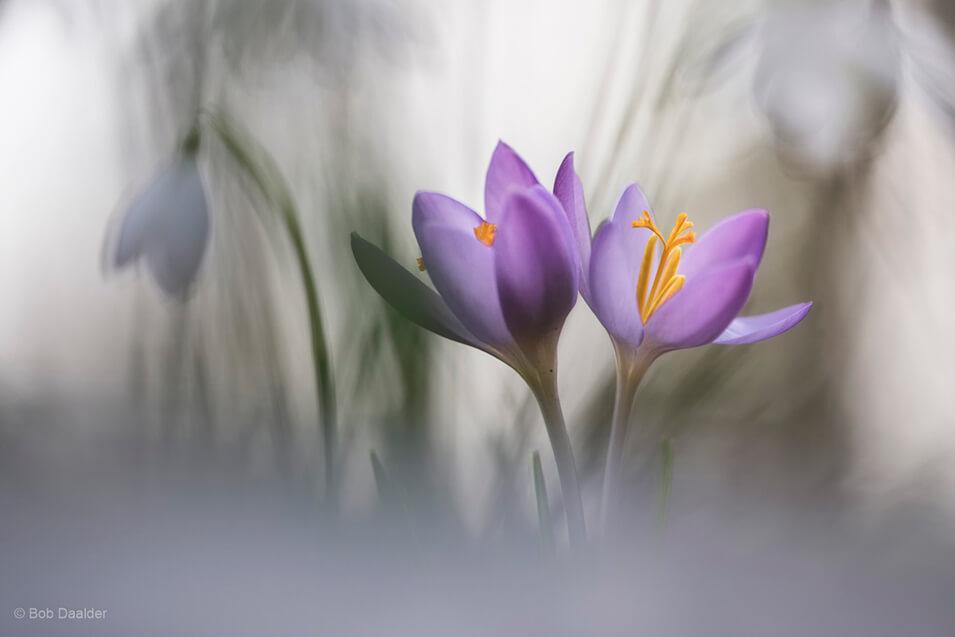 10 tips voor het fotograferen van bloemen - 1