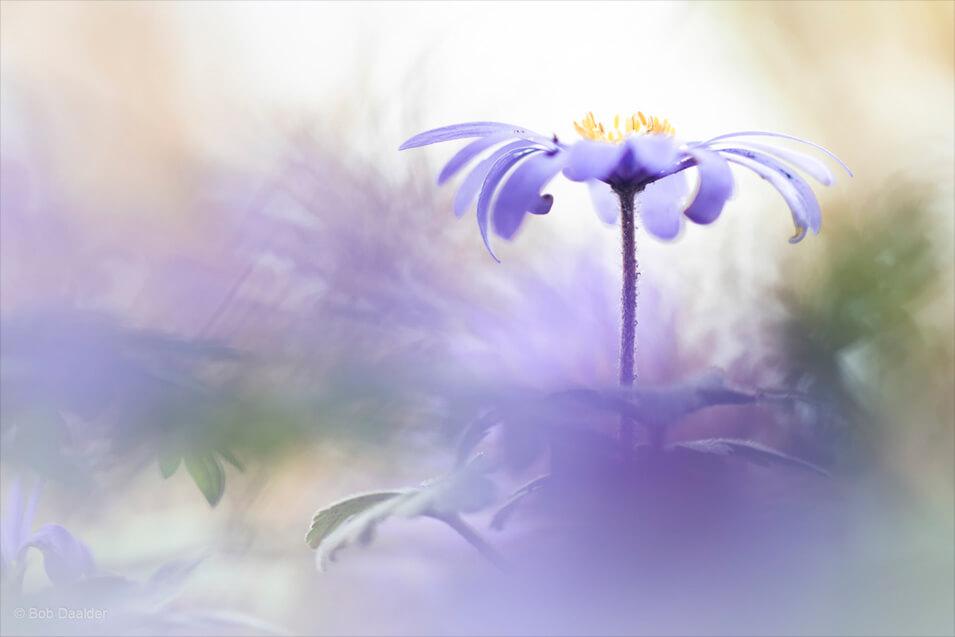 10 tips voor het fotograferen van bloemen - 2