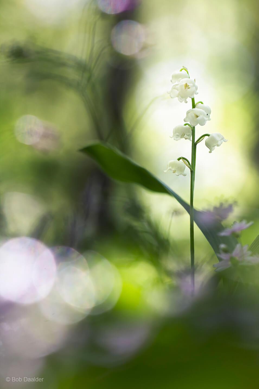 10 tips voor het fotograferen van bloemen - 3
