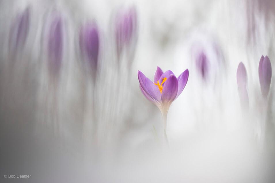 10 tips voor het fotograferen van bloemen - 5