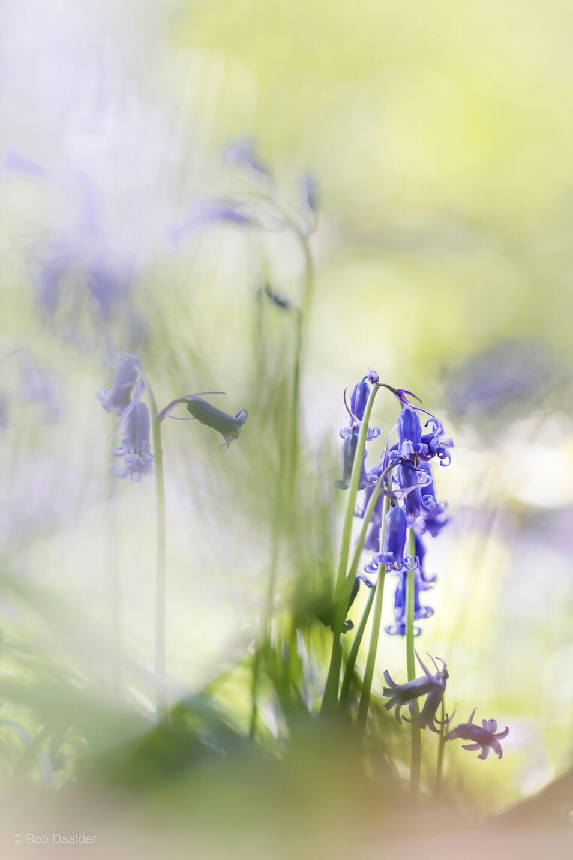 10 tips voor het fotograferen van bloemen - 6