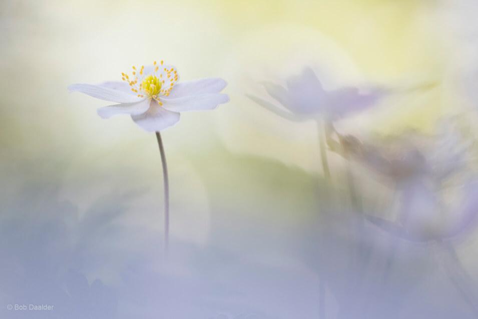 10 tips voor het fotograferen van bloemen - 7