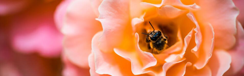 Wat fotografeer je in de lente?