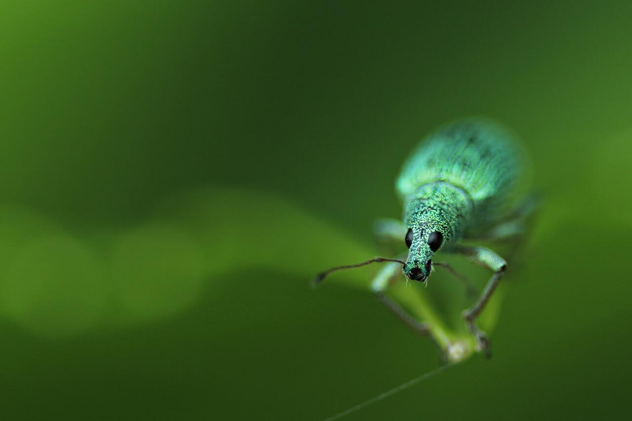 Hoe fotografeer je insecten? - 6