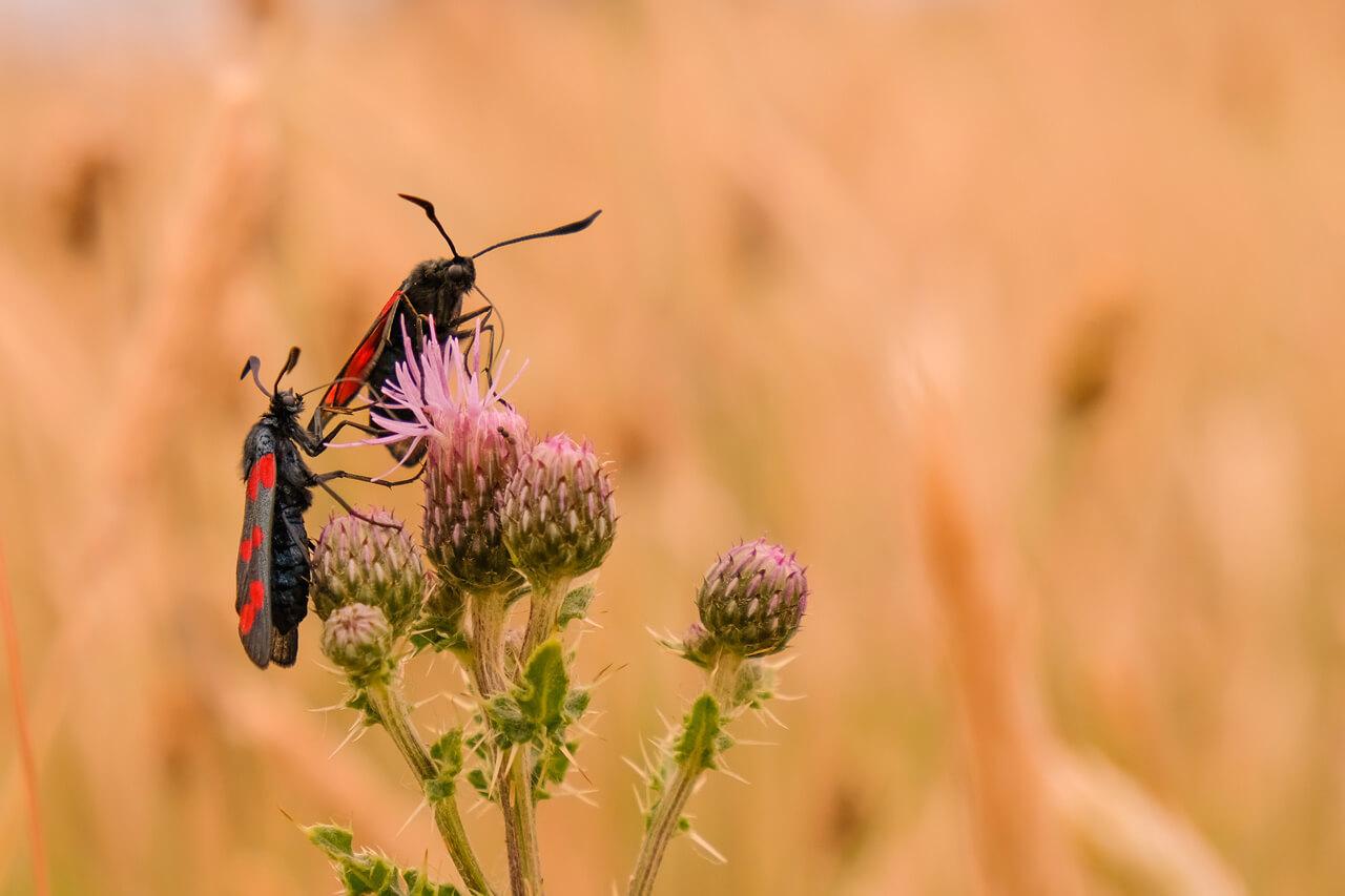 Hoe fotografeer je insecten? - 2
