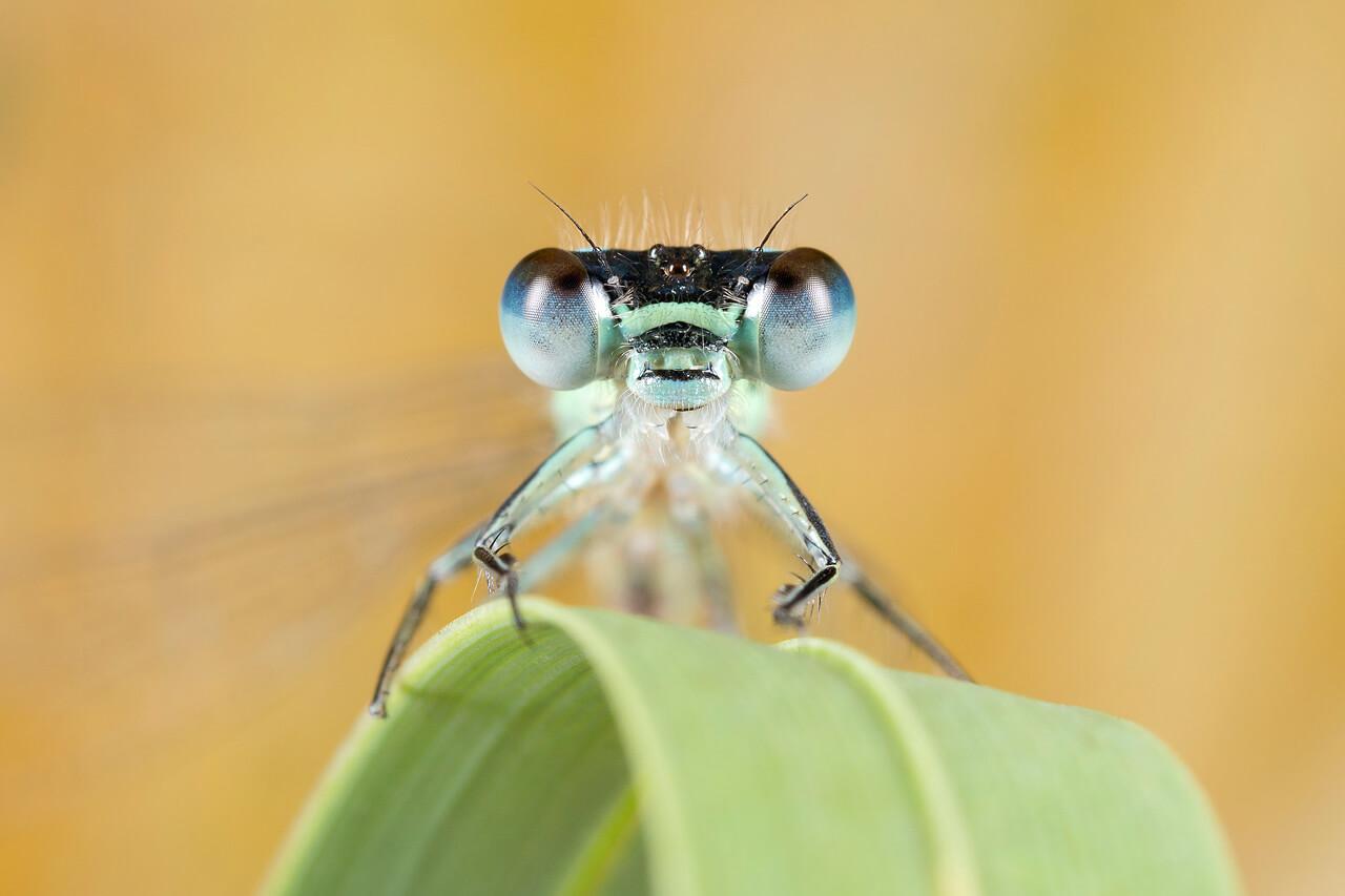 Hoe fotografeer je insecten? - 4