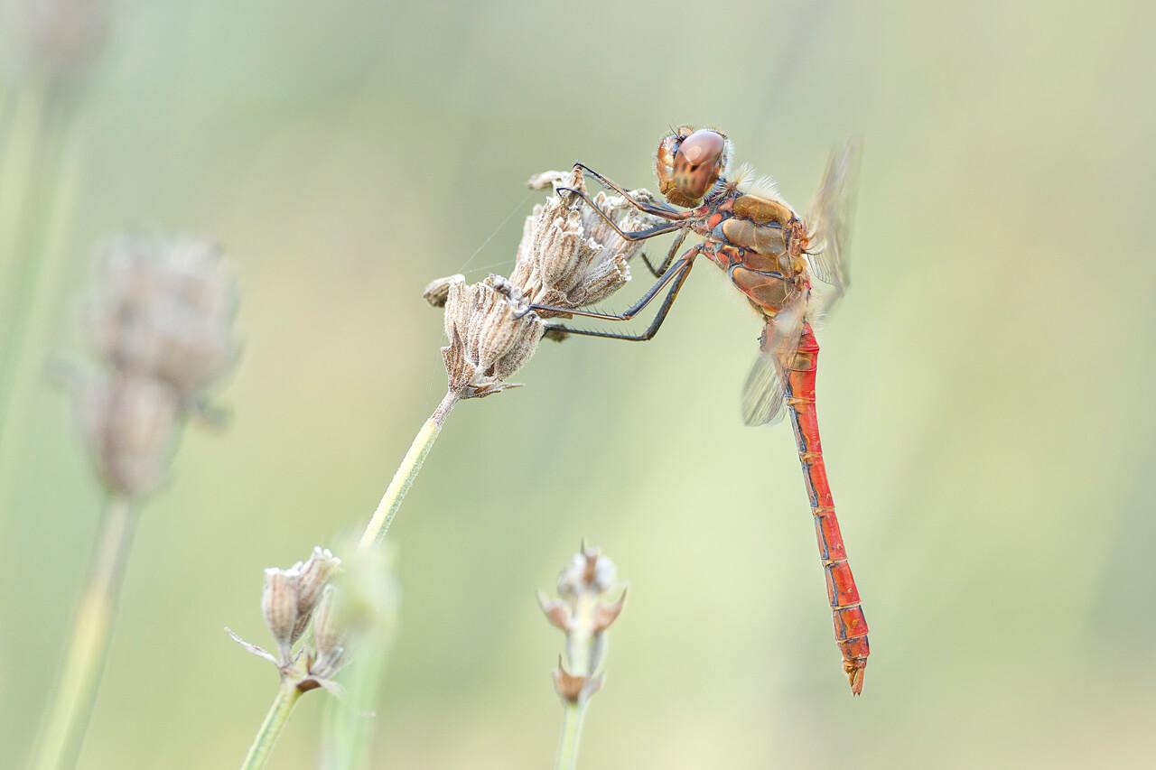 Hoe fotografeer je insecten? - 3