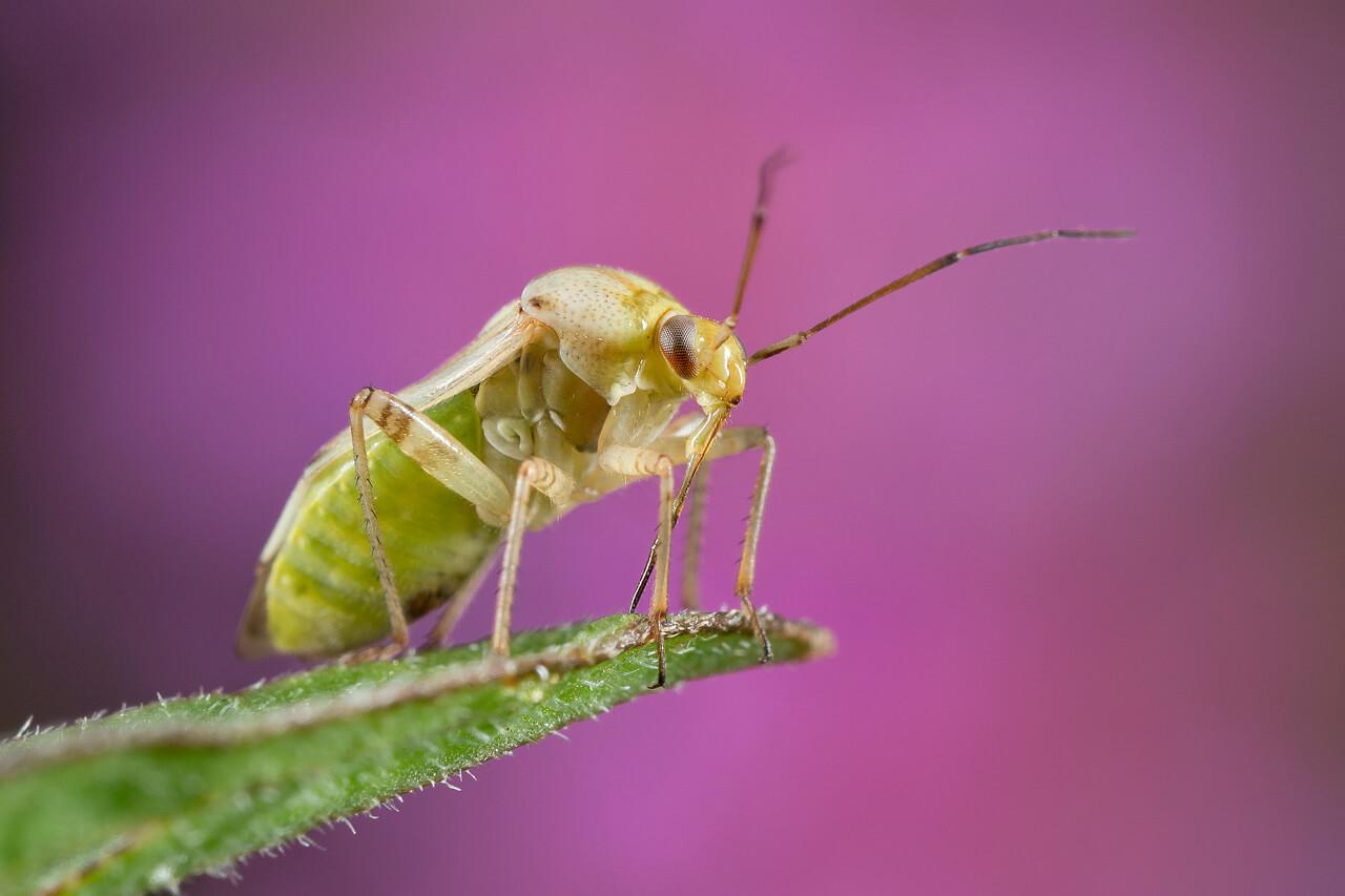 Hoe fotografeer je insecten? - 1