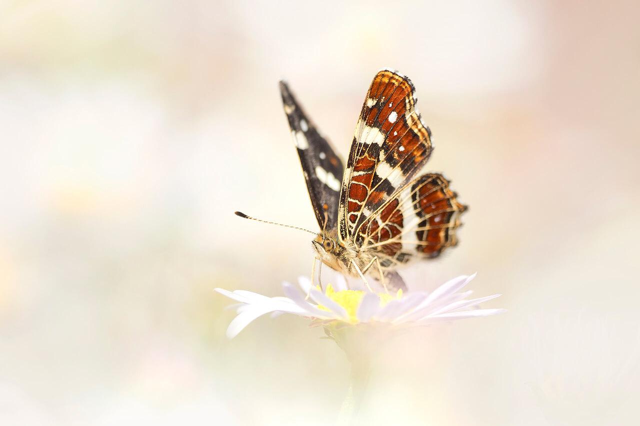 Hoe fotografeer je insecten? - 5