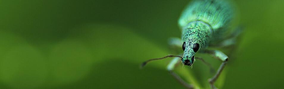 Hoe fotografeer je insecten?