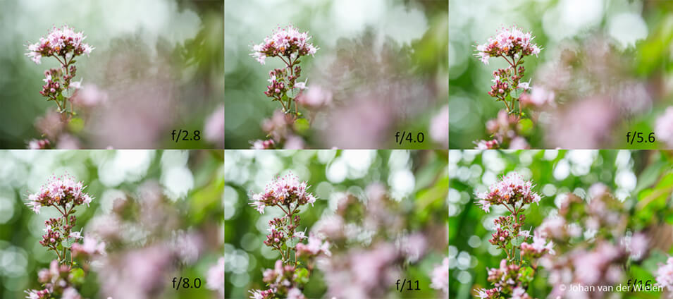 Product review Laowa 100mm f/2.8 2X macrolens - 27