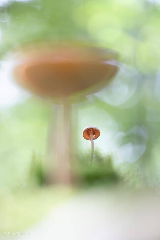 10 tips voor het fotograferen van paddenstoelen - 2