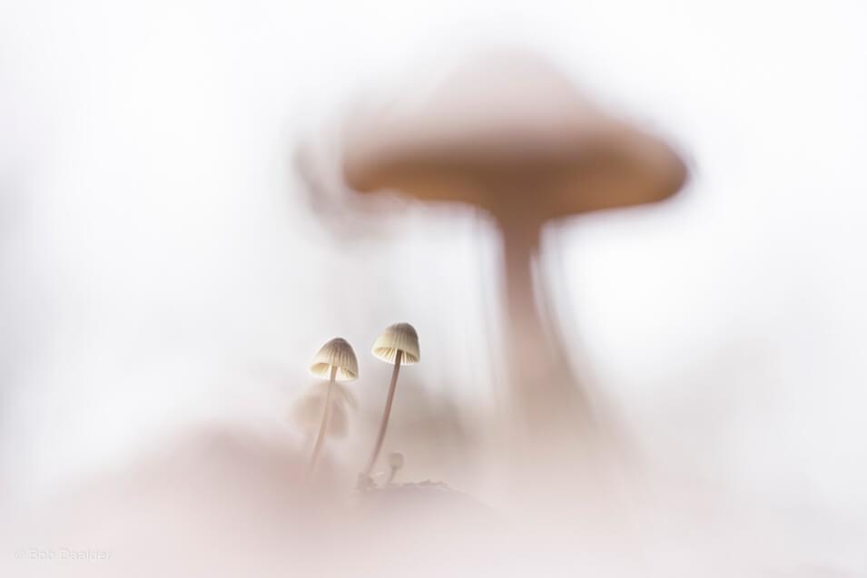 10 tips voor het fotograferen van paddenstoelen - 4