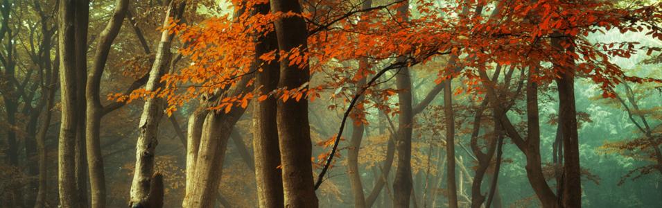 Ochtendnevel in het bos fotograferen