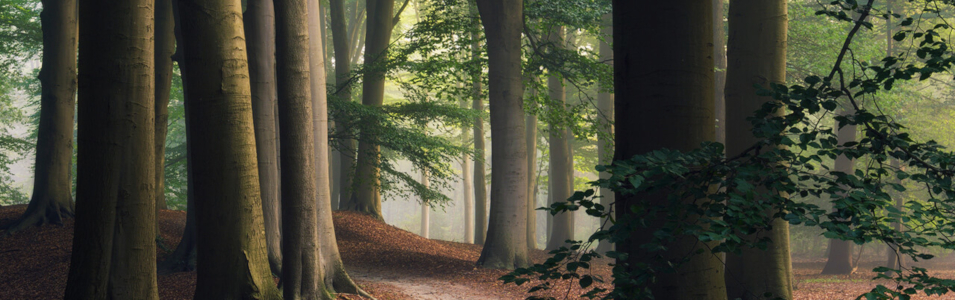 De 13 mooiste bossen van Nederland