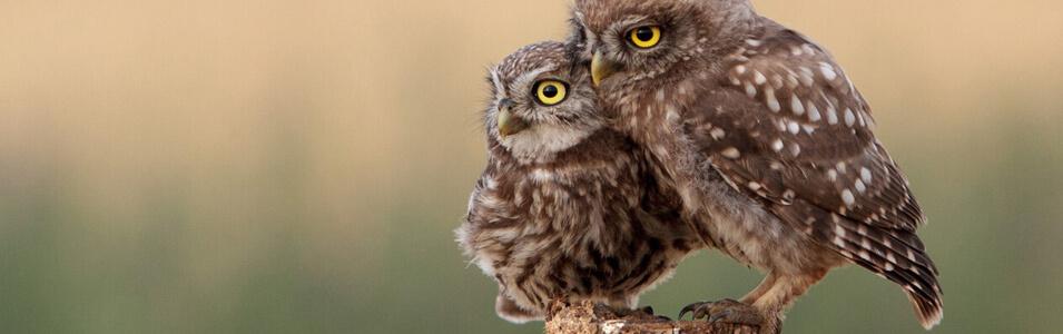 Wat heb je nodig voor vogelfotografie?