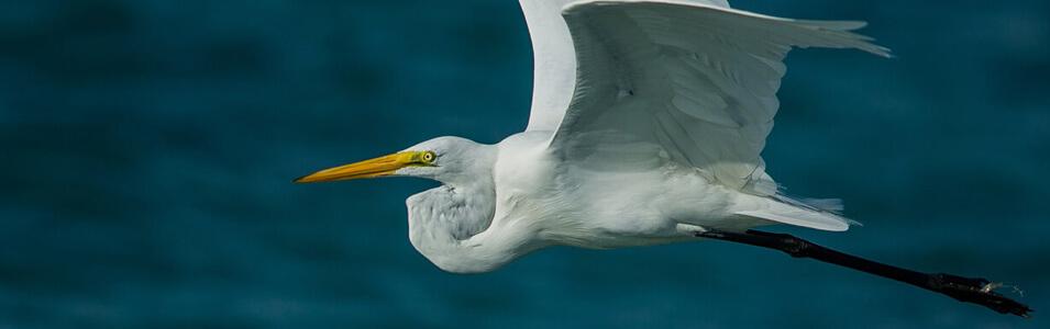 De beste plekken in NL voor vogelfotografie