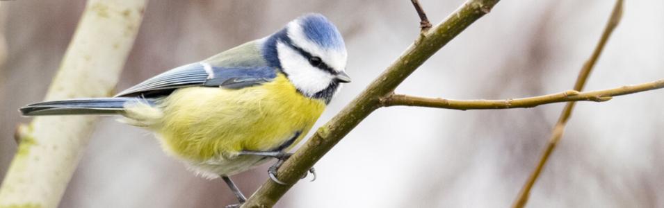 Tips voor het fotograferen van vogels