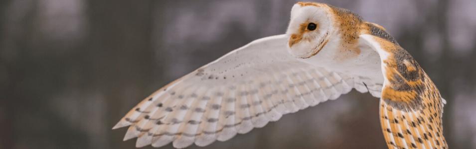 Roofvogels en uilen fotografeer je zo!