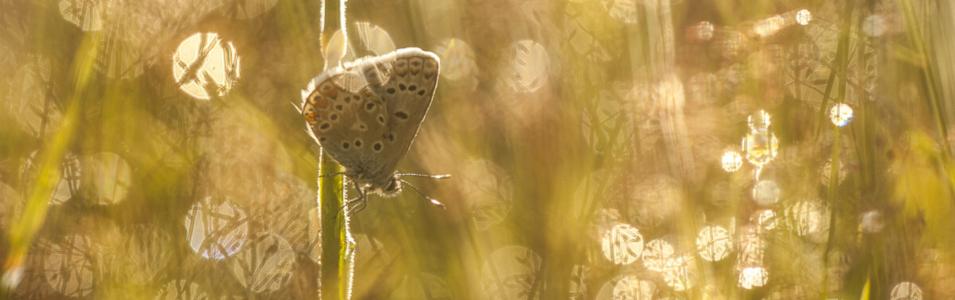 Insecten fotograferen met ochtenddauw