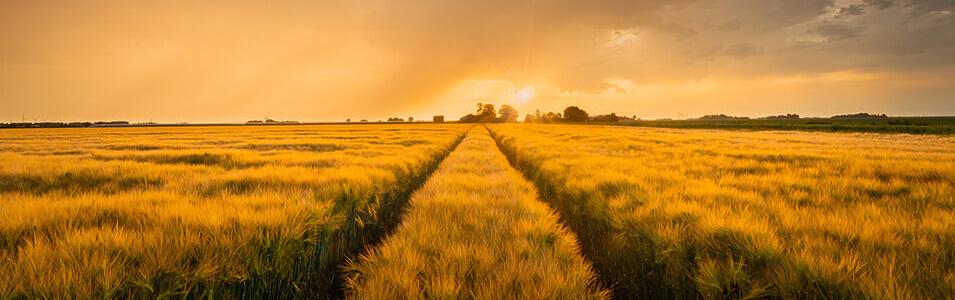 Tips zonsopkomst en zonsondergang fotograferen