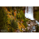 Lensbaby Composer Pro met Edge 80 Optic Nikon - thumbnail 6