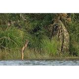 HBN Kameleon Katoenen Camouflagekleed - thumbnail 1