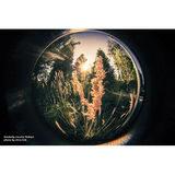 Lensbaby Circular Fisheye Lens 5.8mm voor Canon - thumbnail 4