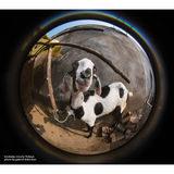 Lensbaby Circular Fisheye Lens 5.8mm voor Canon - thumbnail 7