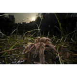 Laowa 15mm f/4.0 Wide Angle 1:1 Macro Canon EF objectief - thumbnail 6