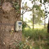 König DR22 Wildlife camera - thumbnail 7