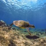 Polar Pro Snorkel Filter voor GoPro Hero 5 - thumbnail 4