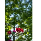 Samyang 35mm f/2.8 AF Sony FE objectief - thumbnail 4