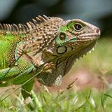Gratis lezing Alexander Koenders over natuurfotografie op Costa Rica