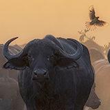 Gratis lezing over wildlife fotografie door Mike Muizebelt