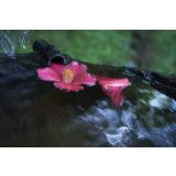 Tamron 17-35mm f/2.8-4.0 Di OSD Nikon objectief - thumbnail 9