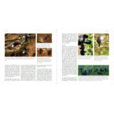 Flitsen, Praktijkgids voor natuurfotografen - van Hoof & van der Wielen - thumbnail 4